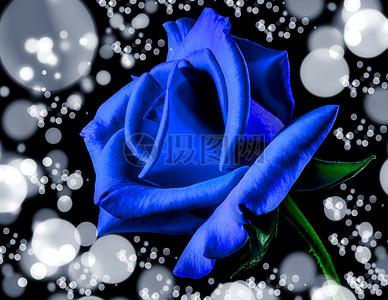 蓝色妖姬花朵图片