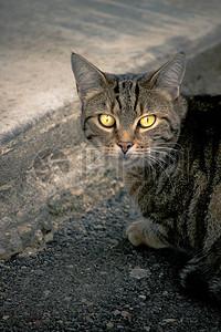 站在地上回头望的小猫图片