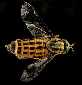 飞翔着的苍蝇图片