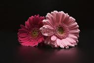 放在桌面的花朵图片