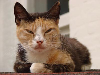 彩色花纹的猫咪高清图片
