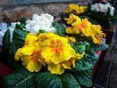 黄色花朵的特写图片