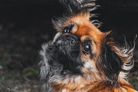 可爱的小狗狗图片