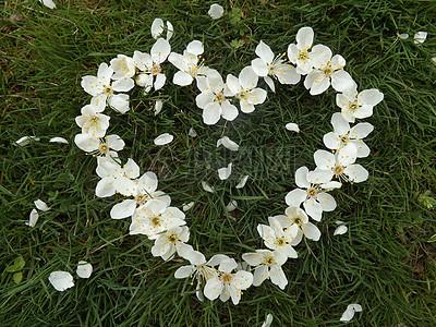 地面上爱心花朵图片