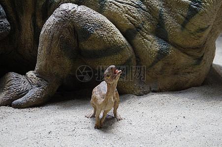 可爱的小恐龙图片