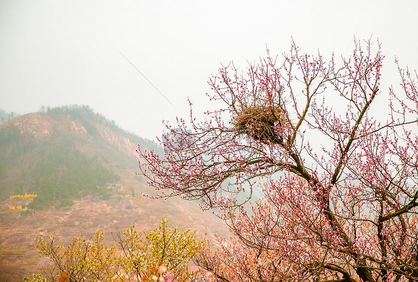 唯美图片 自然风景 盛开的桃花树jpg