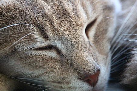 闭眼睛的猫咪高清图片