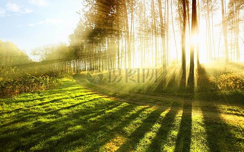 秋天森林里的阳光风景图片