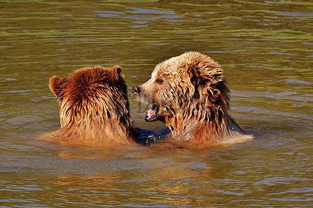 嬉戏玩闹的狗熊图片