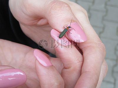 指甲上的小虫子图片