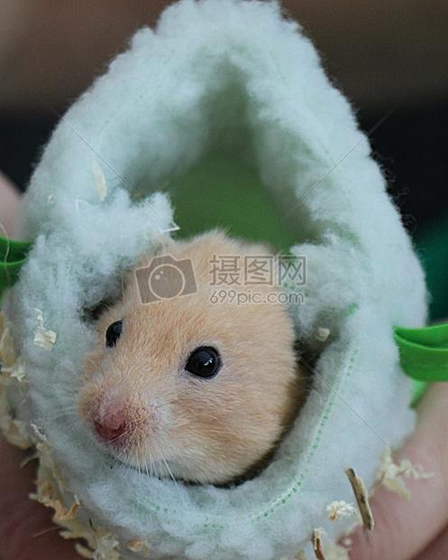 唯美图片 睡袋里的小仓鼠jpg  分享: qq好友 微信朋友圈 qq空间 新浪