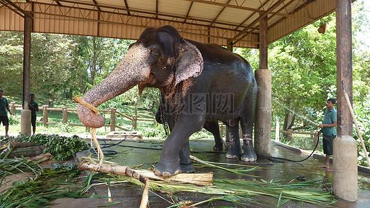 棚子底下的大象图片