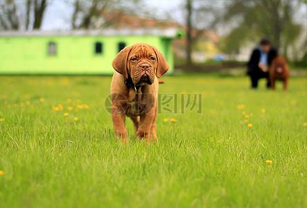 草地上的小狗狗图片