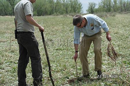 区域副总监Matt霍根植树图片