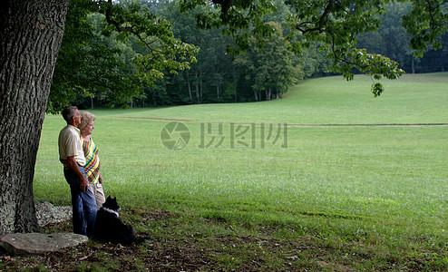 栗子树1A图片