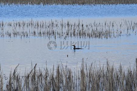 水禽在沙湖图片