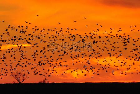 日落沙湖NWR 01野鸭图片