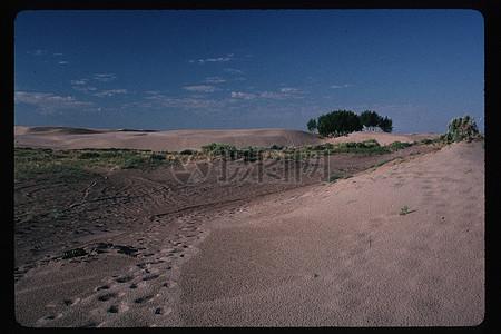荒漠上生长的野草图片