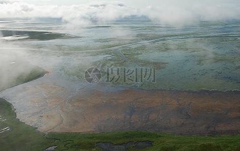 大叶藻在Izembek泻湖图片