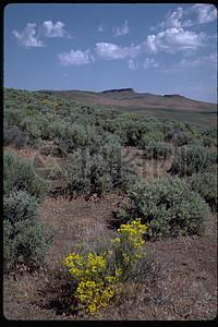 辽阔的草原美景图片