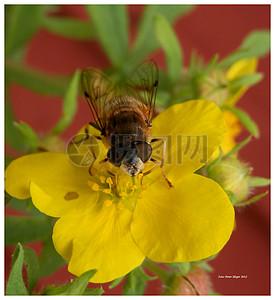 花朵上的苍蝇图片