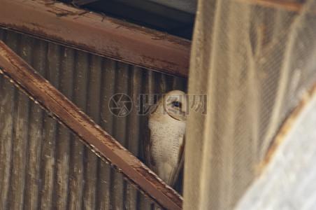 房梁上的鸟儿图片