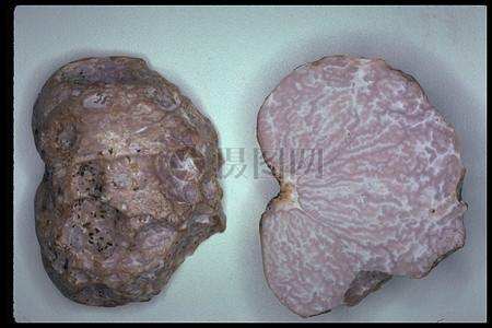 放置的新鲜肉块图片