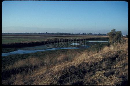 枯草地旁的河水图片