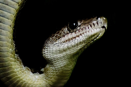 小青蛇的头部图片