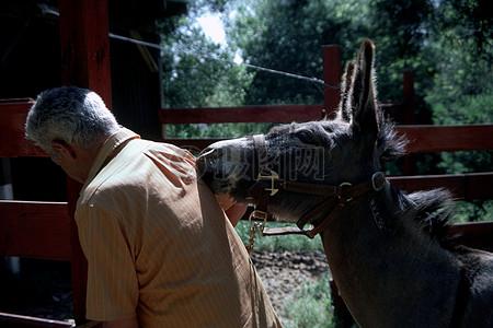 毛驴亲吻主人后背图片