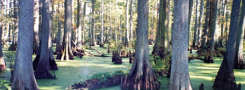 美丽的森林树木图片