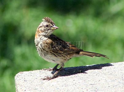 回头注视的小鸟图片