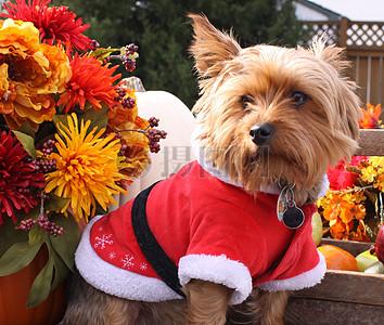 三项赛和秋季狗照片081.JPG图片
