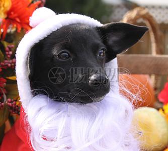 三项赛和秋季狗照片121.JPG图片