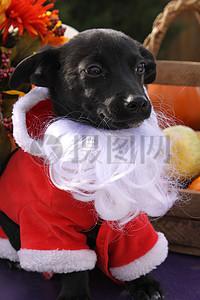 三项赛和秋季狗照片105.JPG图片