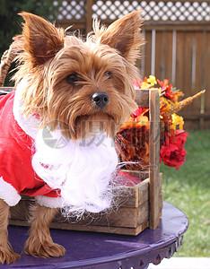 三项赛和秋季狗照片094.JPG图片