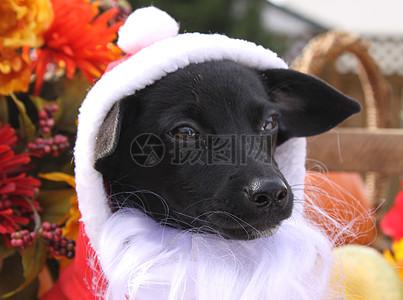 三项赛和秋季狗照片115.JPG图片