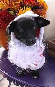 三项赛和秋季狗照片127.JPG图片