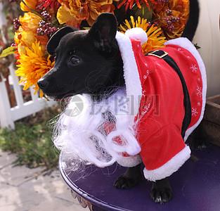 三项赛和秋季狗照片130.JPG图片