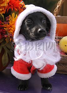 三项赛和秋季狗照片098.JPG图片