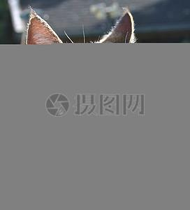 猫脸在早晨图片