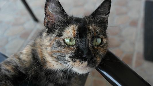 黑猫脸图片