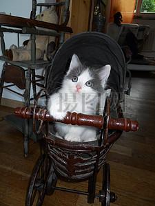 婴儿车里的小猫图片