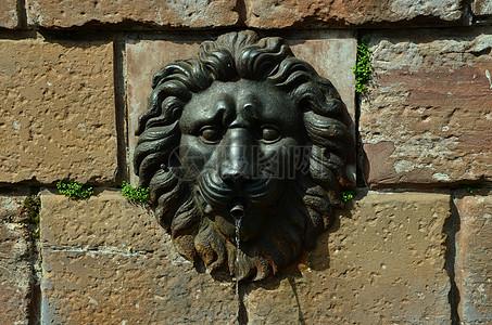 墙壁上的狮子头像图片