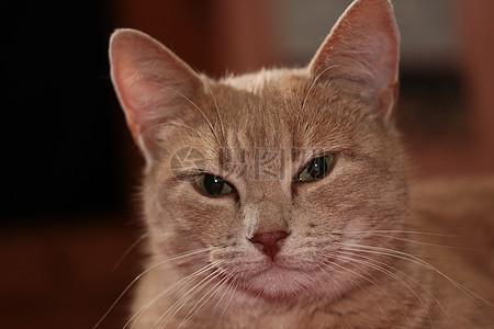 可爱的猫脸图片