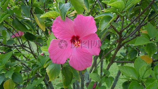 娇小可爱的花朵图片