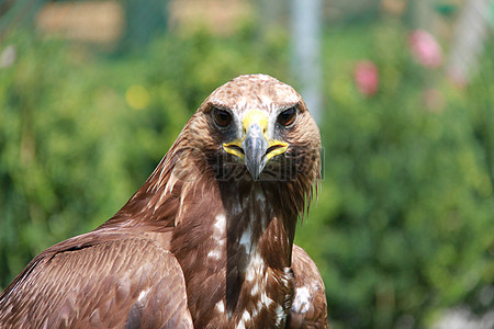 老鹰的头部图片