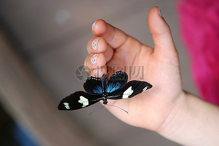 娇小可爱的蝴蝶图片