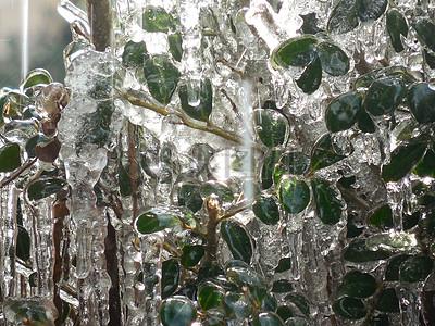 闪耀的宝石在冬季图片