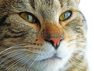 一个可爱的猫脸图片